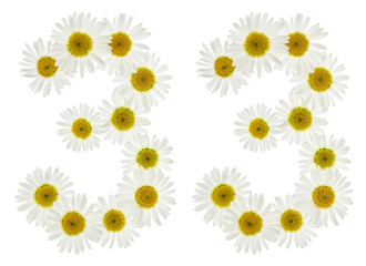 Arabic numeral 33, thirty three, from white flowers of chamomile, isolated on white background