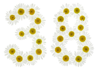 Arabic numeral 38, thirty eight, from white flowers of chamomile, isolated on white background