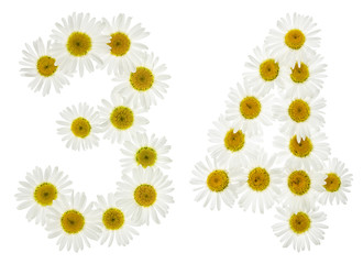 Arabic numeral 34, thirty four, from white flowers of chamomile, isolated on white background