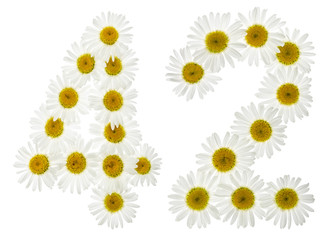 Arabic numeral 42, forty two, from white flowers of chamomile, isolated on white background