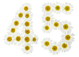 Arabic numeral 45, forty five, from white flowers of chamomile, isolated on white background