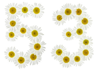 Arabic numeral 53, fifty three, from white flowers of chamomile, isolated on white background