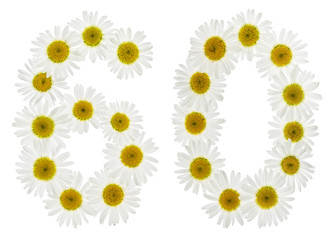 Arabic numeral 60, sixty, from white flowers of chamomile, isolated on white background