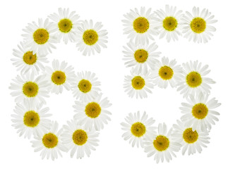 Arabic numeral 65, sixty five, from white flowers of chamomile, isolated on white background