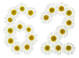 Arabic numeral 62, sixty two, from white flowers of chamomile, isolated on white background