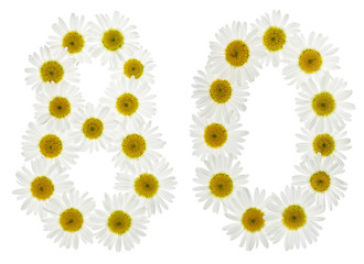 Arabic numeral 80, eighty, from white flowers of chamomile, isolated on white background