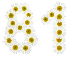 Arabic numeral 81, eighty one, from white flowers of chamomile, isolated on white background