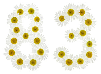 Arabic numeral 83, eighty three, from white flowers of chamomile, isolated on white background