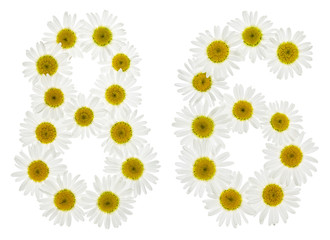 Arabic numeral 86, eighty six, from white flowers of chamomile, isolated on white background