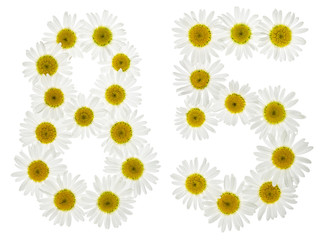 Arabic numeral 85, eighty five, from white flowers of chamomile, isolated on white background