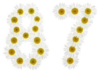 Arabic numeral 87, eighty seven, from white flowers of chamomile, isolated on white background
