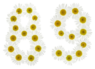 Arabic numeral 89, eighty nine, from white flowers of chamomile, isolated on white background