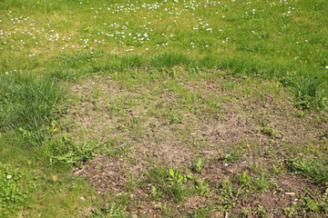 Nice green grass with big circe with just sown grass, mostly with just dirt and small stones