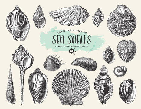 retro summer, beach and ocean vector design elements: large collection of hand drawn vintage sea shells and snails