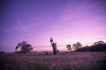 Dead Tree at Night Landscape