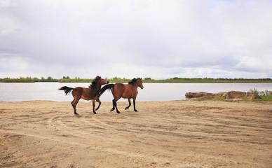 Horses run along the river.
