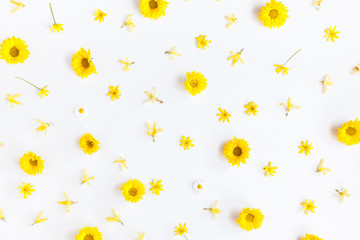 Flowers composition. Pattern made of chrysanthemum flowers on white background. Flat lay, top view
