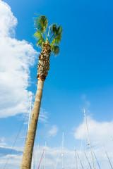 palm on blue sky. musts