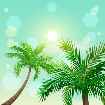 Tropical palm trees and sun in zenith