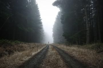 Moody Foggy Landscape Fototapete