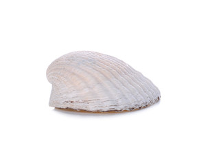 White sea shell isolated on white background