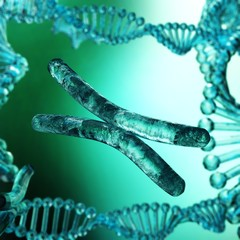 Chromosome, DNA