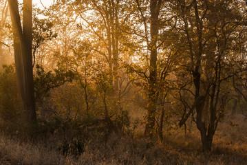 Mopane Woodland