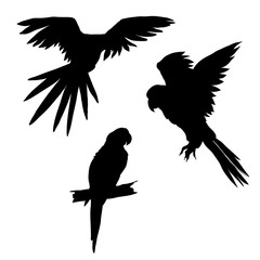 Vector illustration. Set of parrots, flying parrots. Parrot sitting on a branch. Black silhouette