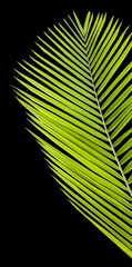 palme verte sur fond noir