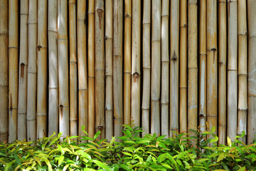 Bamboo wall with the fresh green bush