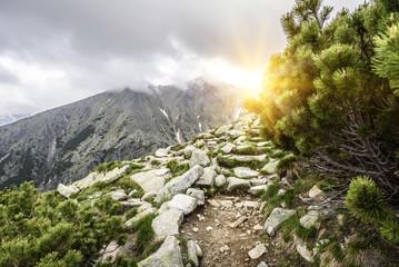Mountain trail. Tatra Mountains. Wall mural