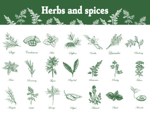 Herbs and spices set. Hand drawn