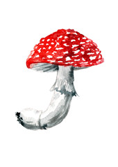 Watercolor drawing mushroom amanita. Not edible, poisonous plant. Autumn illustration, greeting card. Hand drawing on white isolated background.