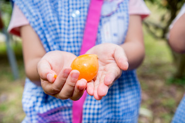Child's Hands Holding a loquat