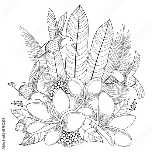 Vector Flying Hummingbird Or Colibri Plumeria Flowers And Palm Leaf In Contour Style Isolated On