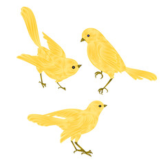 Singing gold birds Canary vintage  set two vector  animals illustration for design hand draw
