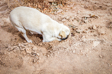 Dog digging his head in the sand