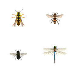 Realistic Bee, Midge, Damselfly And Other Vector Elements. Set Of Insect Realistic Symbols Also Includes Damselfly, Beetle, Dragonfly Objects.