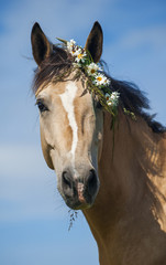 Cream horse with the flower wreath