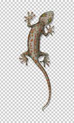Lizard on the wall