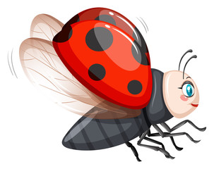 Cute ladybug flying on white background