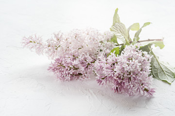 Lilac background Blossom lilac on background Lilac flowers Holiday background
