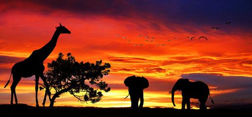animales salvajes en el paisaje