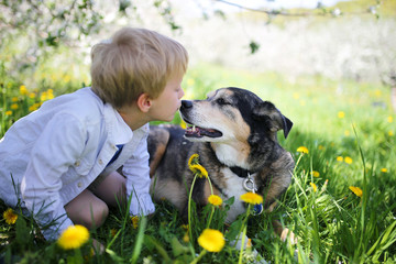 Young Child Kissing Pet German Shepherd Dog Outside in Flower Meadow