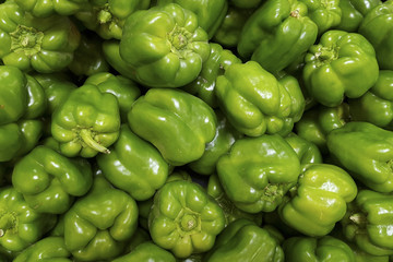 Horizontal image of bulk Green Bell Peppers