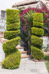 Ornamental cypress trees