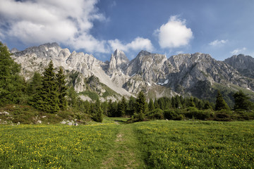 Flowered meadow and tall trees in front of the mountains on a sunny day