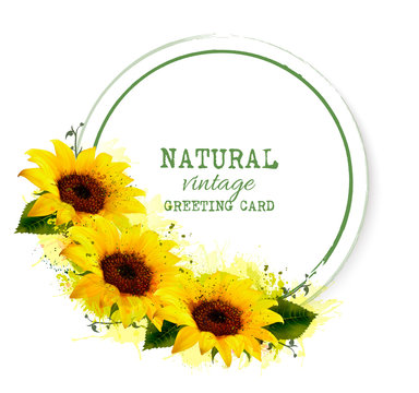 Nature vintage greeting card with yellow sunflowers. Vector.