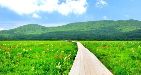 初夏の湿原の風景
