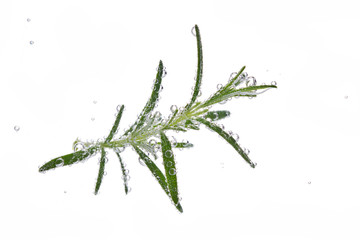 branch of rosemary with bulb